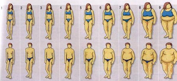 體型對照圖
