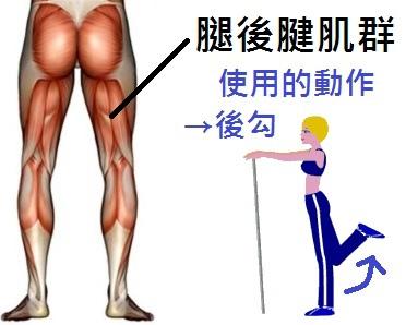 腿後腱肌群