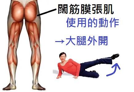 闊筋膜張肌