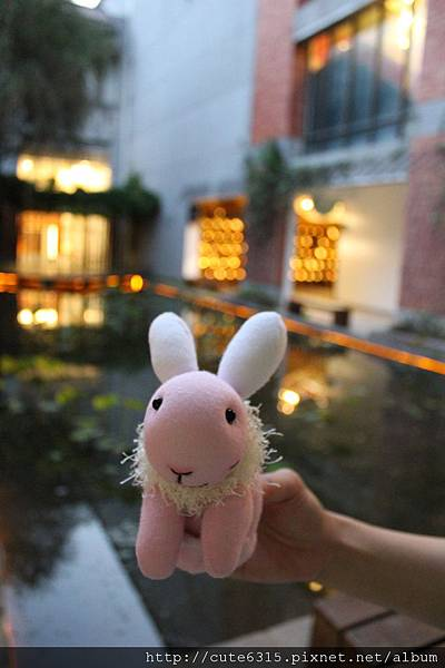 粉紅兔4.JPG