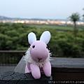 粉紅兔5.JPG