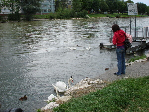 其實多瑙跟其他的河流沒啥兩樣