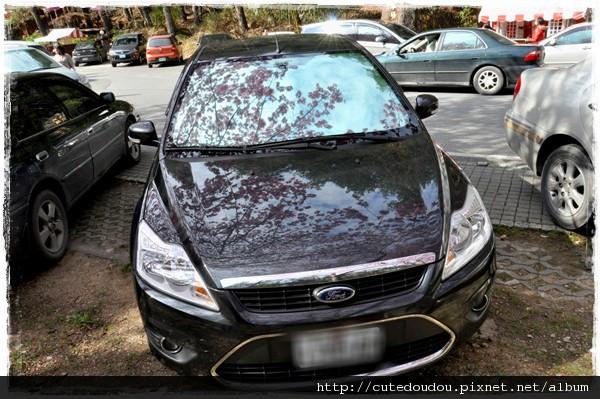 櫻花下的車車