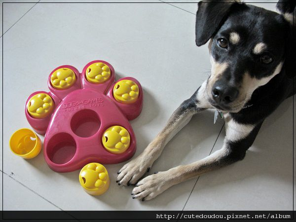 腳掌益智玩具