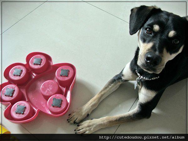 腳掌益智玩具 背後