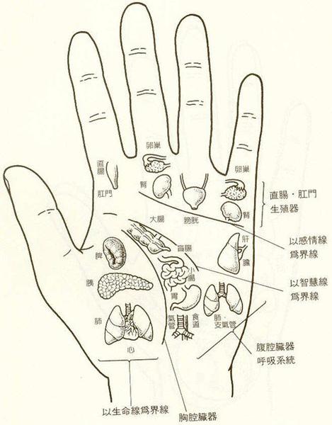 手-穴位圖
