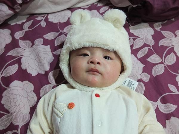 2013.11.26偽裝成小白熊