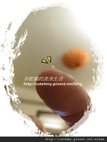 IMG_2941