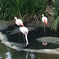 San Diego Wild Animal Zoo 016.jpg