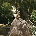 San Diego Wild Animal Zoo 027.jpg