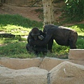 San Diego Wild Animal Zoo 170.jpg