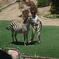 San Diego Wild Animal Zoo 058.jpg