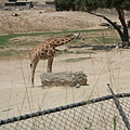 San Diego Wild Animal Zoo 104.jpg