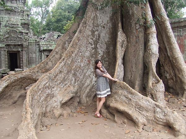 空心樹真的很巨大