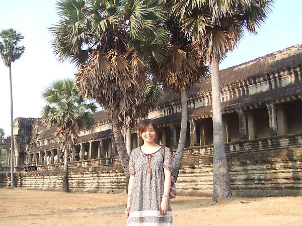 整排的棕梠樹,是柬埔寨的特產