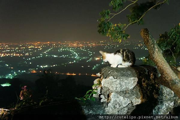 貓與夜景2011/12/31