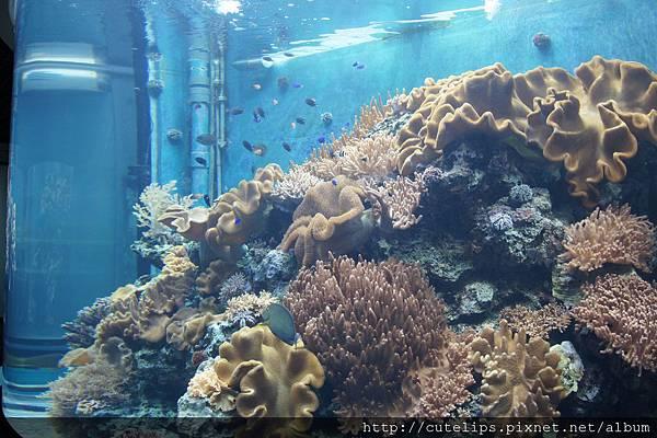 珊瑚礁預覽區