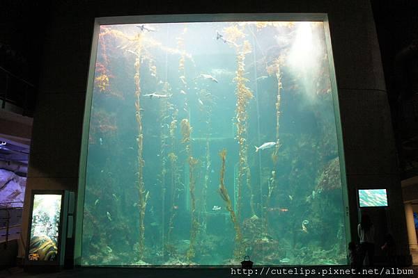 海藻森林展示區