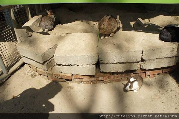 可愛動物區-兔子