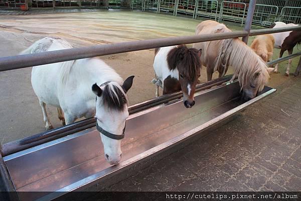 馬兒餵食區