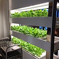 店家栽種的蔬菜