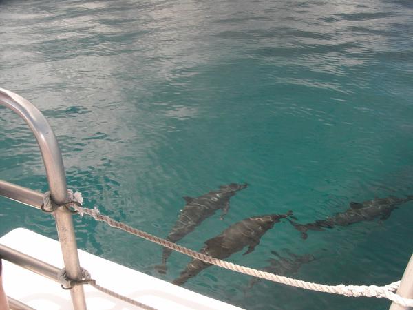 乘飛魚號出海找海豚