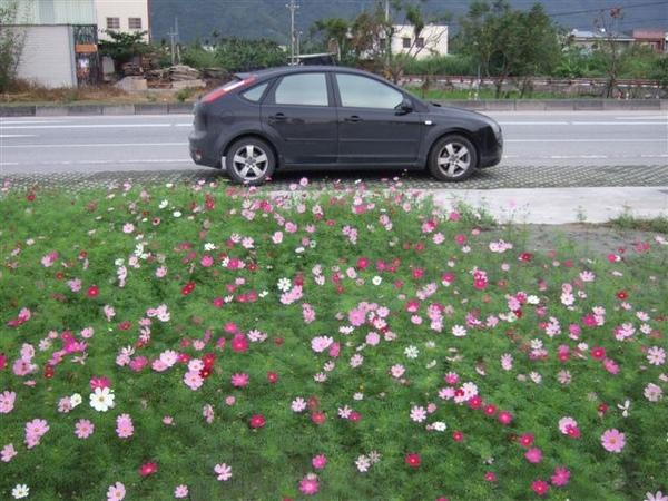 胖福在花群中