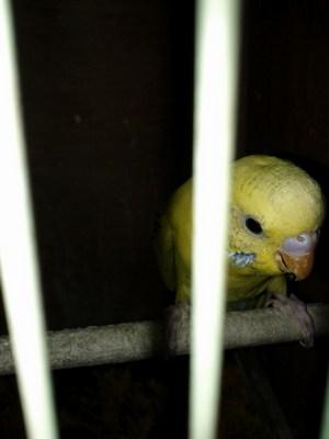第一次購入隻小鳥-1