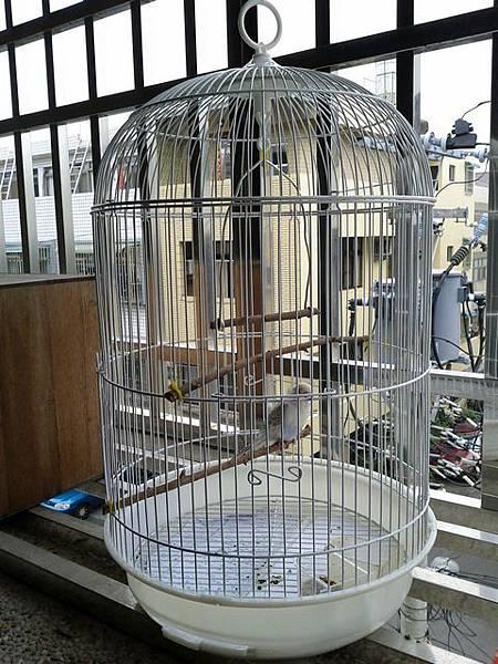 義賣買的鳥籠