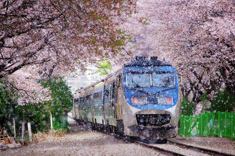 002(www.enjoykorea.asia)