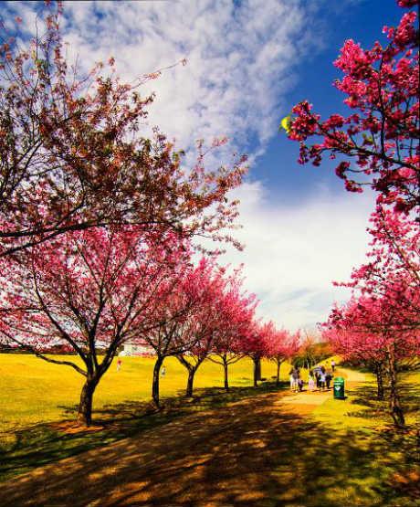 005(www.flickr.com)