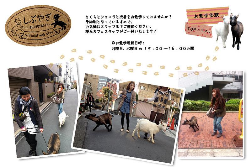 (www.udagawacafe.com)桜丘カフェ003