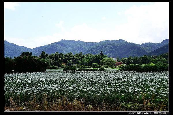 2012.09.27 大溪中新里韭菜花_DSC_9513