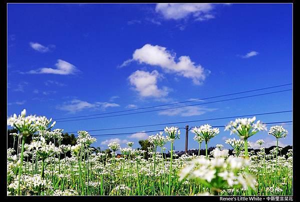 2012.09.27 大溪中新里韭菜花_DSC_93881