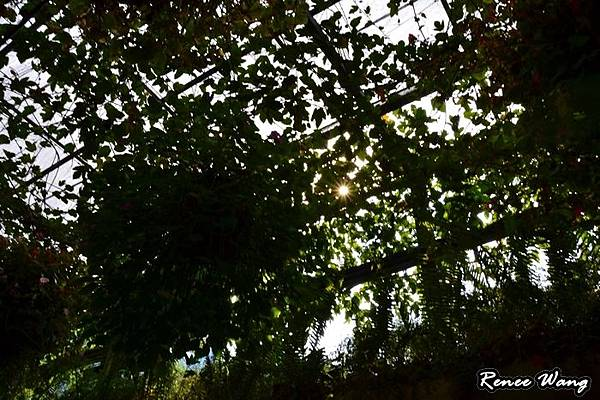 2012.10.27-28 家庭出遊-2埔里台一種苗場_DSC_0045