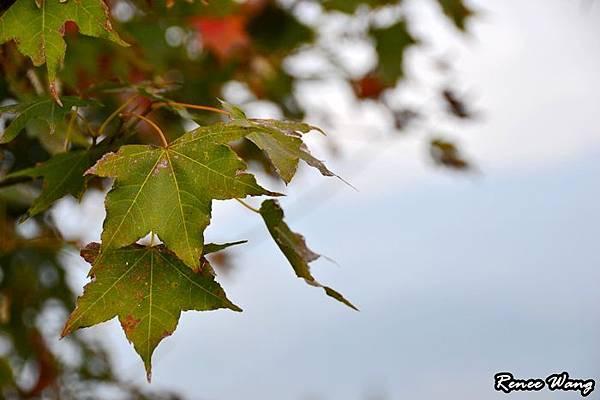 2012.10.27-28 家庭出遊-3青青草原_DSC_0241