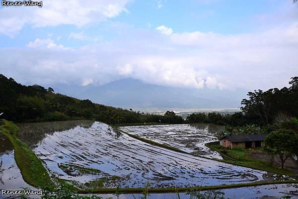 2013.01.24 富里--03羅山村泥火山田埂_DSC_5262.JPG
