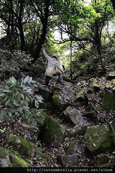 2015.03.28  茶壺山半平山O型縱走_Renee_DSC7772.jpg