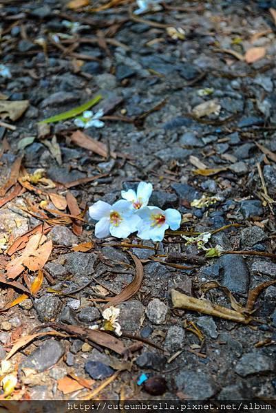 2015.04.25 Tungmaoshan, Mt. Tobo_Renee_DSC8073-1.jpg
