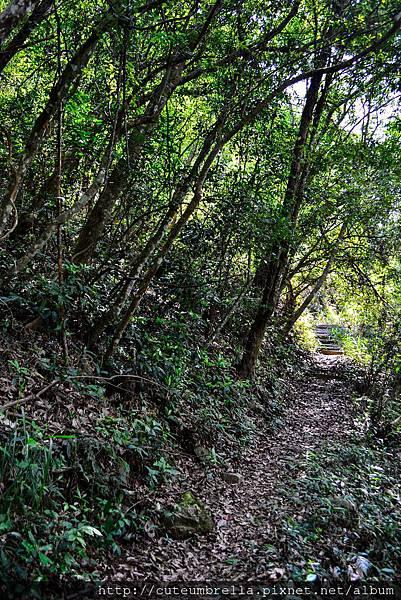 2015.04.25 Tungmaoshan, Mt. Tobo_Renee_DSC8086-1.jpg