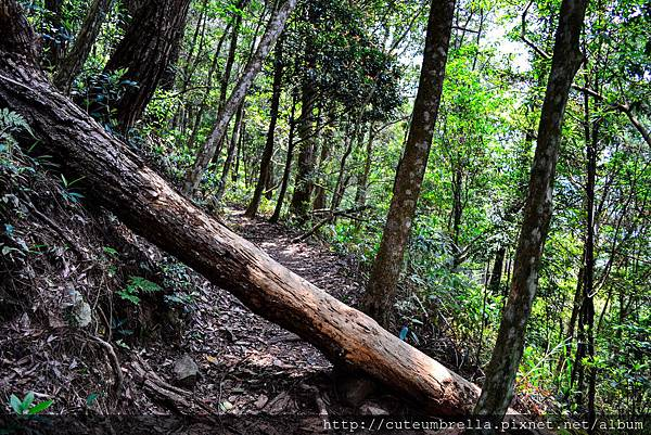 2015.04.25 Tungmaoshan, Mt. Tobo_Renee_DSC8148-1.jpg