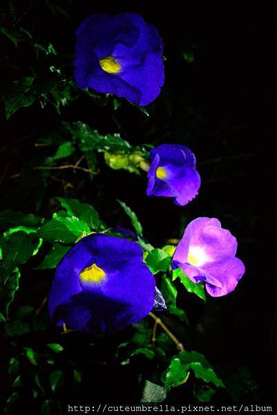 2015.04.25 Tungmaoshan, Mt. Tobo_Renee-8361.jpg