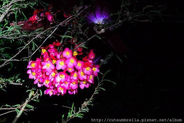 2015.04.25 Tungmaoshan, Mt. Tobo_Renee-8364.jpg