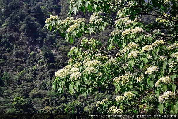 2015.04.25 Tungmaoshan, Mt. Tobo_Renee-8370.jpg