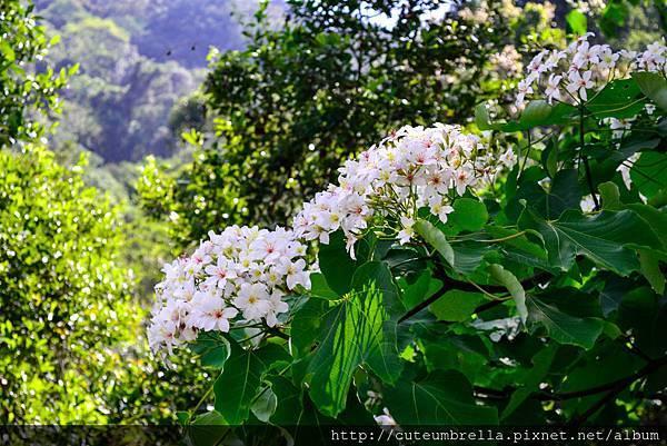 2015.04.25 Tungmaoshan, Mt. Tobo_Renee-8403.jpg
