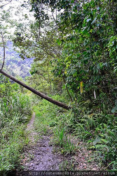 2015.04.25 Tungmaoshan, Mt. Tobo_Renee-8415.jpg