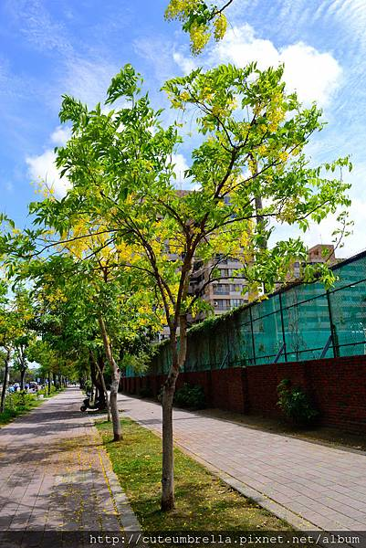 2015.05 .29 台南羊蹄甲_DSC8521-1.jpg