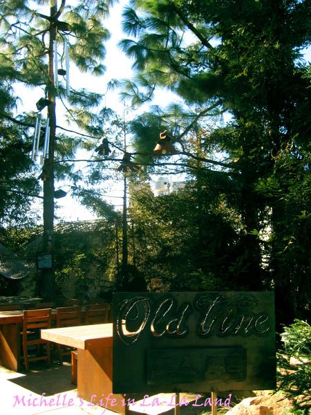Old Vine Cafe-01.jpg