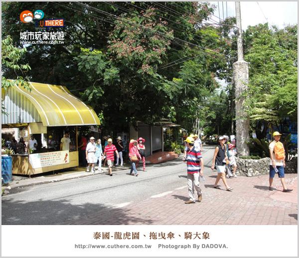 泰國-龍虎園-拖曳傘-騎大象26.jpg