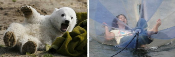 Knut & Q